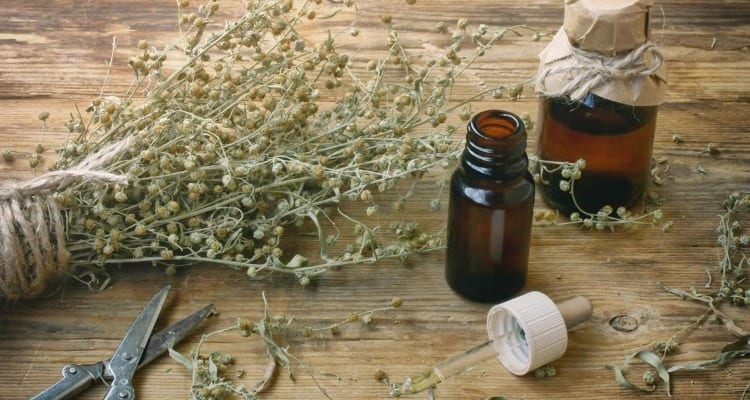 Raw wormwood herb to help treat parasites and parasitic infection