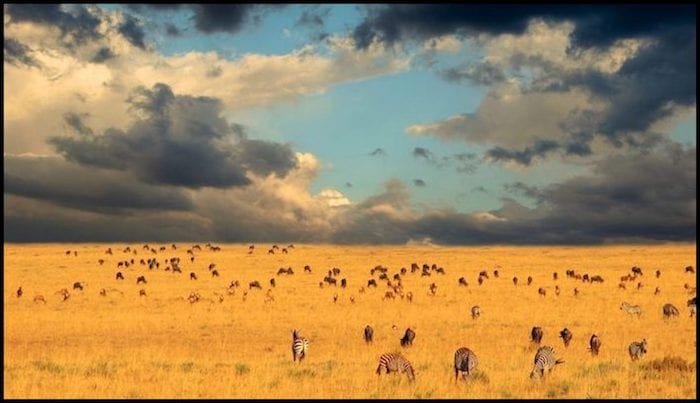 Great African Migration Fall Adventure