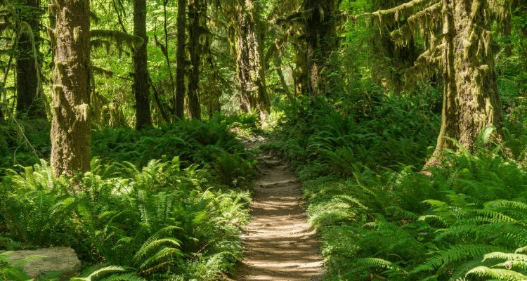 Beautiful midday image of the forest on the Pacific Northwest Scenic Trail