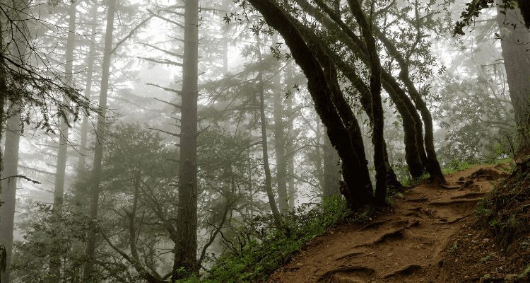 Foggy morning hike on the Dipsea Trail with David Aston and the AdventureHacks Bay Area hiking crew.