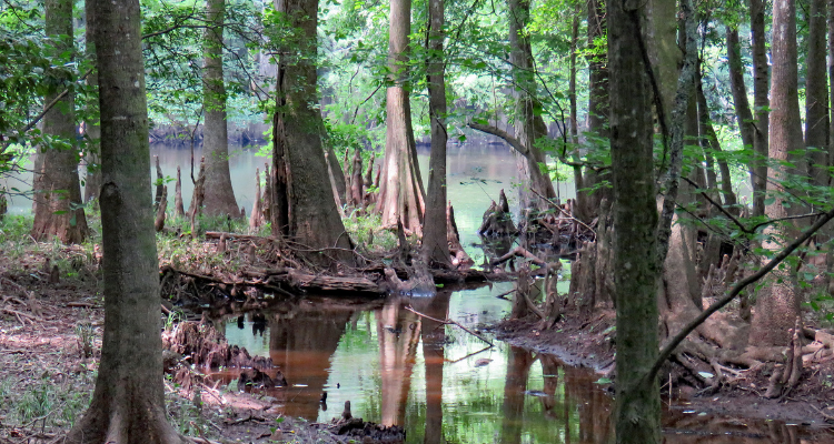 About Congaree National Park