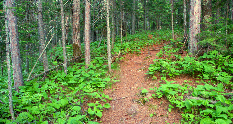 Forest hike in Marquette, Michigan