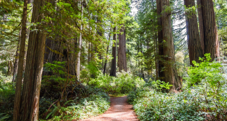 Redwood National and State Park Hiking Trails
